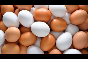 يعتبر بيض الدجاج غذاء نموذجيا للإنسان، لأنه يحتوي على بروتين سهل الهضم وفيتامينات مختلفة وعناصر كيميائية يحتاجها الجسم