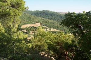 غابات عجلون تفوز بأفضل موقع أخضر في العالم