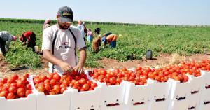 عودة التصدير عبر الأردن للدول العربية