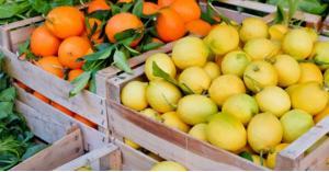 سبب انخفاض أسعار الحمضيات في الأردن
