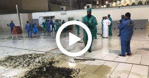 حشرات وأسراب جراد تجتاح الحرم المكي.. فيديو وصور