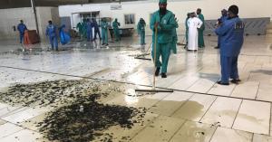 حقيقة انتشار الحشرات في الحرم المكي.. فيديو وصور