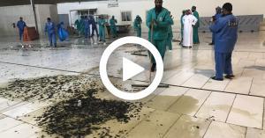 مكة توضح فيديو الحشرات بساحات الحرم.. فيديو
