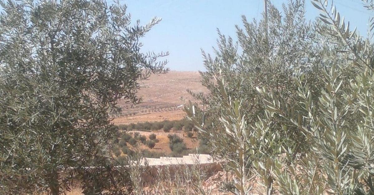 الجفت.. وقود الشتاء في بلاد الزيت والزيتون
