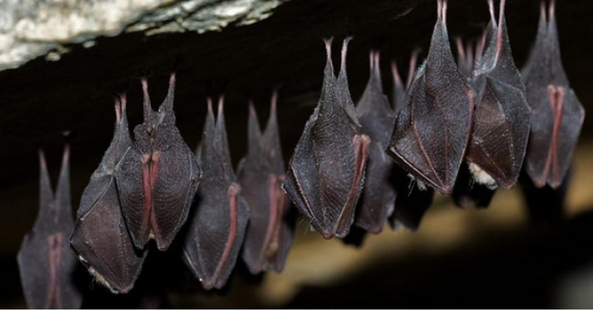 """""""الخفافيش"""" تهاجم مصر"""