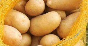 البطاطا تحتوي على مادة سامة