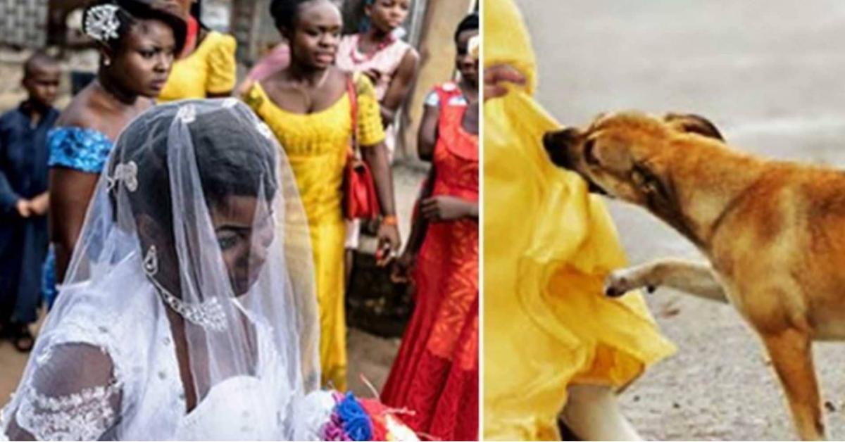 """قصة """"كلب"""" أنقذ العشرات من """"انتحارية الزفاف"""""""