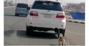 يربط كلبًا بسيارته ويسحبه بلا رحمة.. فيديو