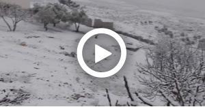 تساقط الثلوج في المملكة.. (صور-فيديو)