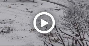 تجدد تساقط الثلوج في الجنوب.. فيديو