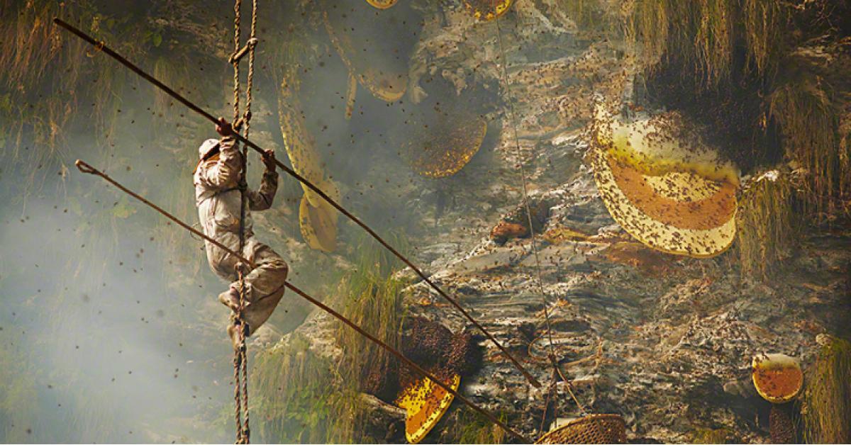 هل شاهدت من قبل كيف يتم استخراج العسل من الجبال؟ (فيديو)