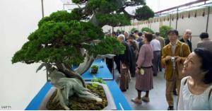 سرقة شجرة عمرها 400 عام