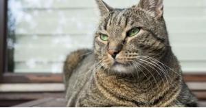 عضّة قطة تصيب مراهقاً بخلل في الدماغ