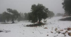 الأحد.. امطار في مختلف محافظات المملكة وفرصة لتساقط الثلج في الجنوب