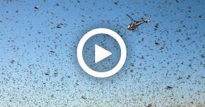 بيان هام من وزارة الزراعة حول الجراد الصحراوي (فيديو)