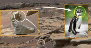 بطريق على المريخ.. ماذا يفعل؟!