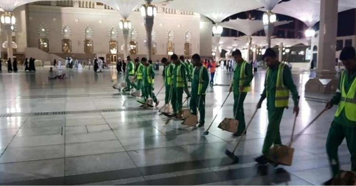 """انتشار كثيف لـ""""الجندب الأسود"""" في ساحات المسجد النبوي.. فيديو"""