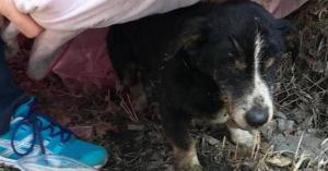 كلب ينبش قبره ويعود لأصحابه