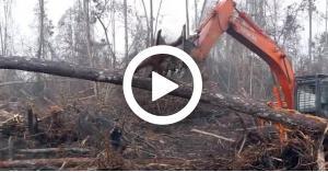 """شاهد بالفيديو.. """"إنسان الغاب"""" يصارع جرافة دفاعا عن بيته"""