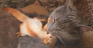 """قطة """"حنونة"""" تتبنى سناجب يتامى (صور)"""