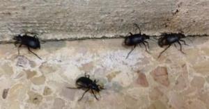 الزراعة تفسر ازدياد انتشار الحشرات بالأردن