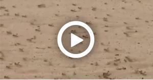 بالملايين .. اسراب الجراد تغزو السعودية (فيديو)