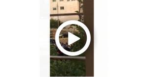 لحظة القبض على النائب السابق هند الفايز.. فيديو