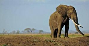 أنثى فيل تدهس رجلا حتى الموت بسبب غضبها