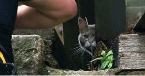 عملية إنقاذ قطة تتكلف 5 آلاف إسترلينى.. صور