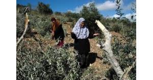 الاحتلال يهدم بناية و4 بركسات ويقتلع اشجار زيتون في الضفة الغربية