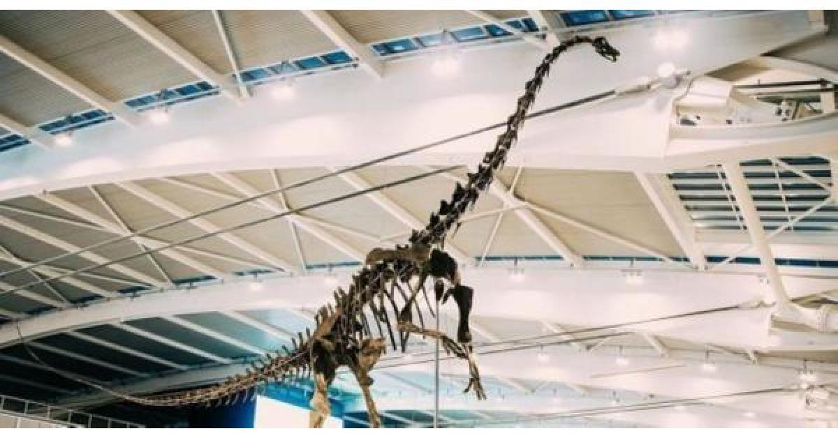 سحب ديناصور من مزاد باريسي
