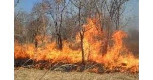 اخماد حريق اعشاب في الشميساني