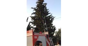 المفرق.. انقاذ قطة علقت في شجرة (صور)