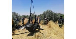 إنقاذ بقرتين سقطتا داخل حفرة في إربد (صور)
