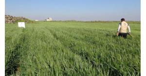 16 مليار دولار اضرار القطاع الزراعي بسوريا