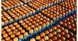 فريق تحقيق للبحث عن مليون بيضة فاسدة
