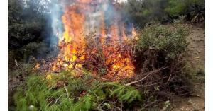 إخماد حريق أشجار حرجية ومثمرة في اربد