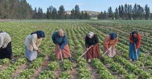 الاغوار : جلسة تناقش تحديات المرأة العاملة في الزراعة