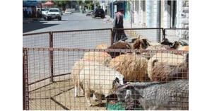 90 الف أضحية في عمان