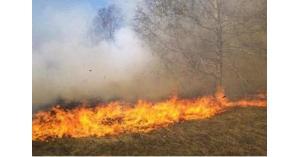 إخماد حريق أشجار مثمرة في إربد