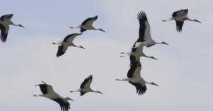 بدء موسم هجرة الطيور