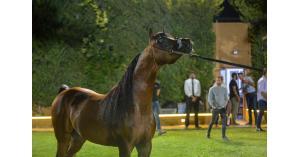 مربط الخطيب يولم للفرق المشاركة بجمال الخيول في الشرق الأوسط