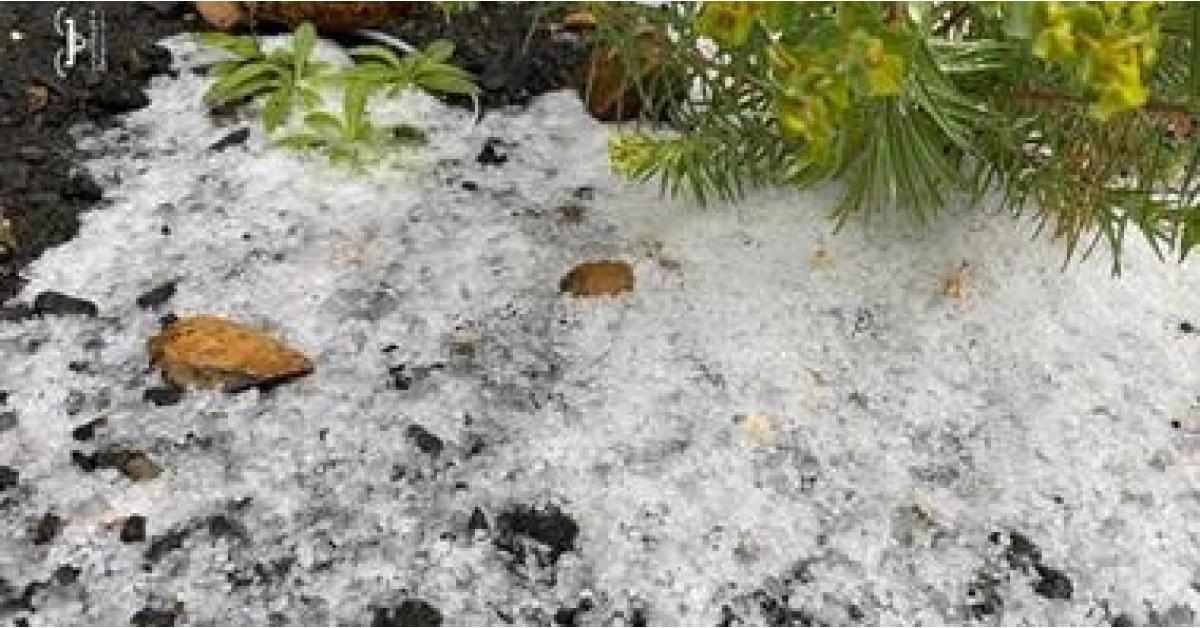 شاهد.. الثلوج تتساقط في السعودية