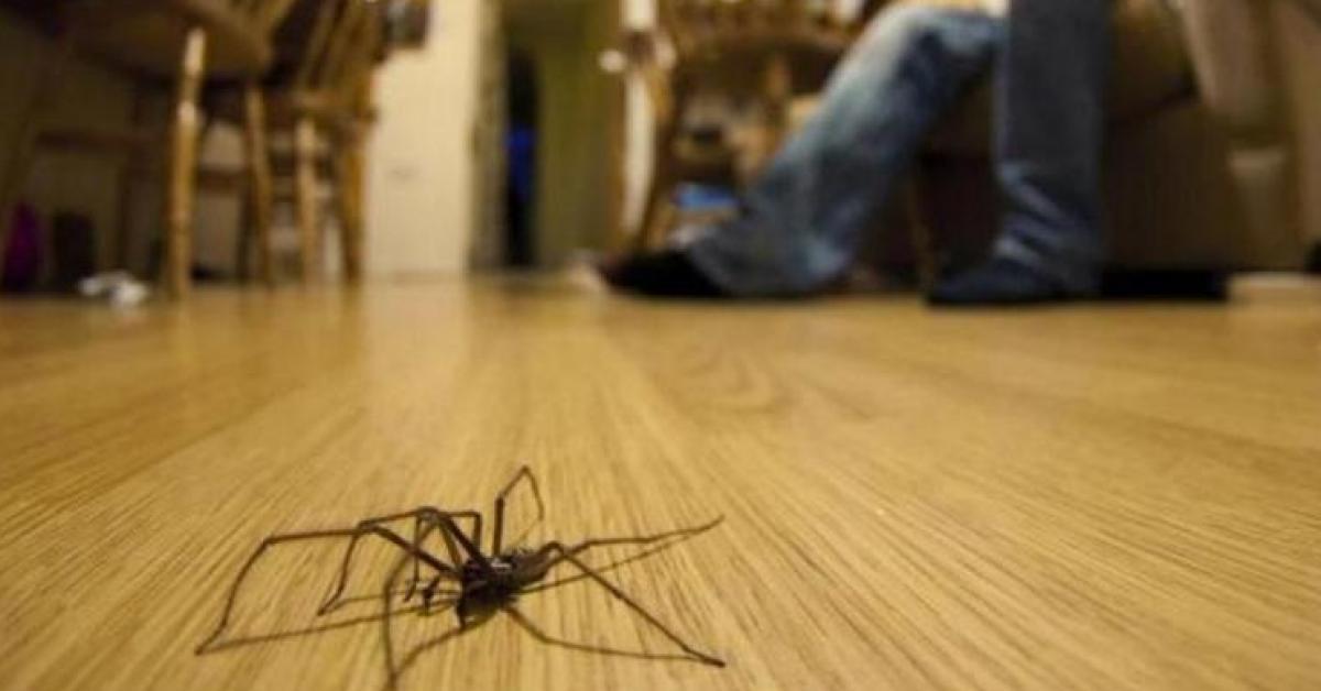 حقائق ستمنعك من قتل عناكب المنزل