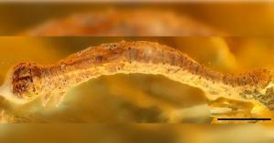 العثور على كائن حي عمره 44 مليون عام