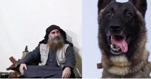 حيرة وجدل واسع بشأن الكلب الذي ساهم بالقضاء على البغدادي