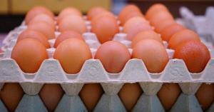 كرتونة البيض