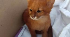 أنقذت قطة من الشارع فاكتشفت مفاجأة صادمة