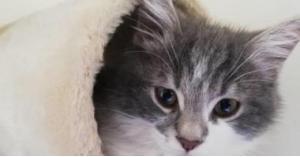 أول فندق خاص للقطط في سوريا
