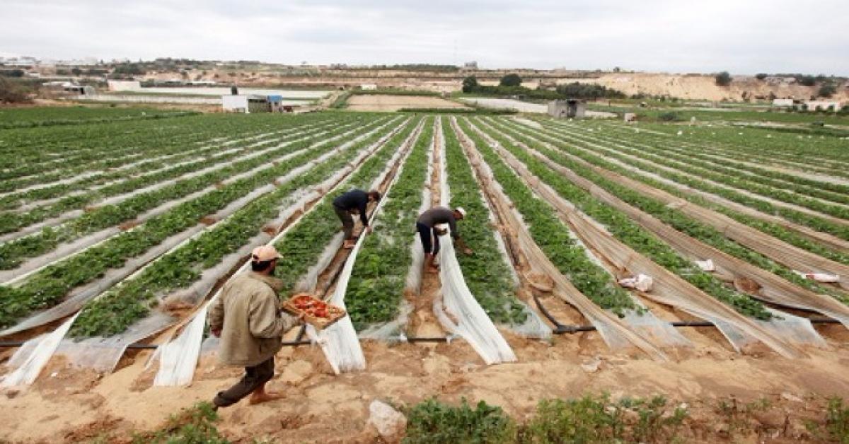 تحذيرات من وزارة الزراعة خلال المنخفض الجوي